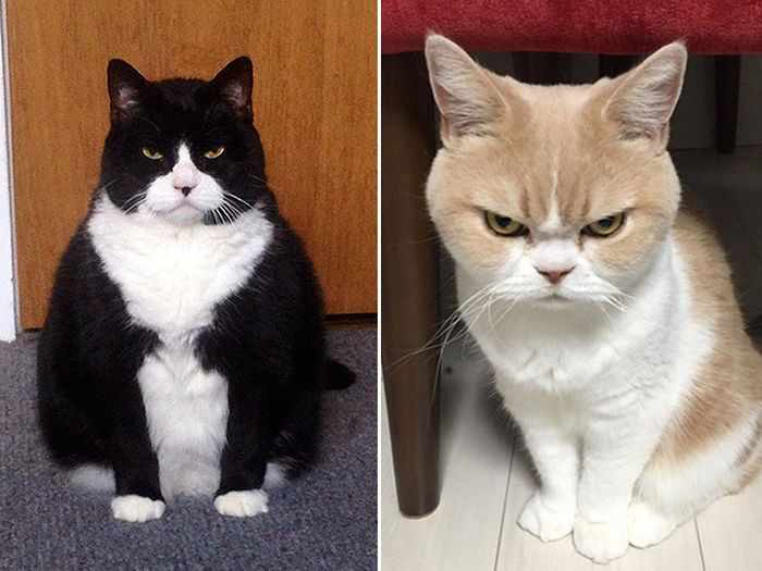 24 Angry Cats That Plotting to Kill You - Angry Cats Compilation -14