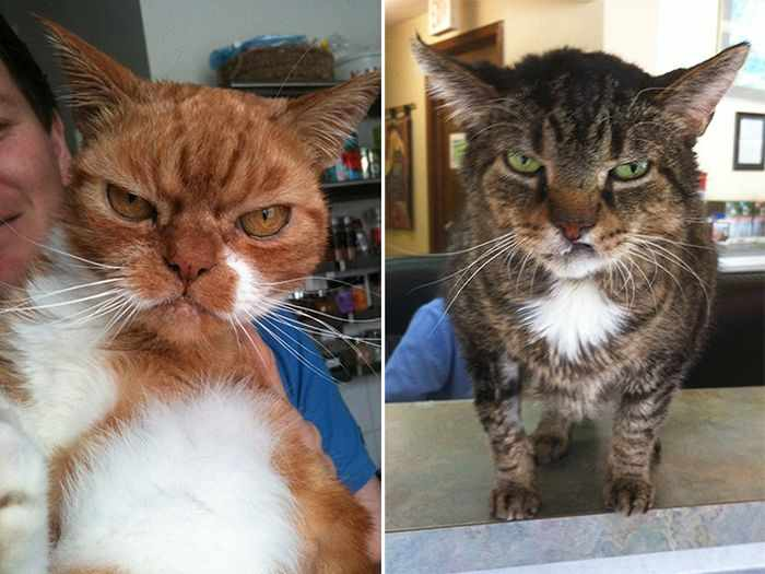 24 Angry Cats That Plotting to Kill You - Angry Cats Compilation -19