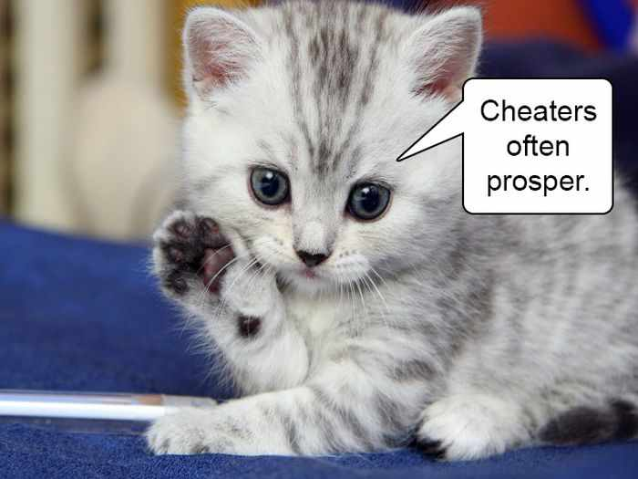 20 Hard Truths From Cats Will Amaze You -06
