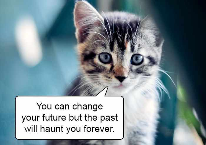 20 Hard Truths From Cats Will Amaze You -07