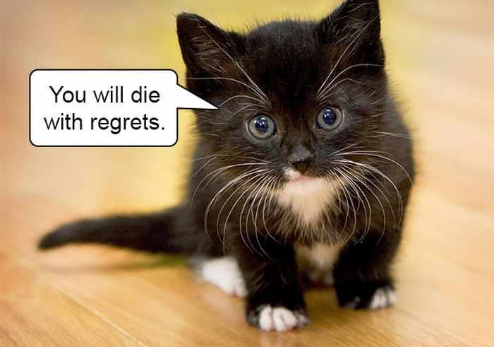 20 Hard Truths From Cats Will Amaze You -08