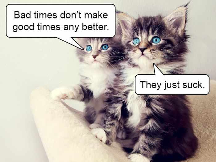 20 Hard Truths From Cats Will Amaze You -09