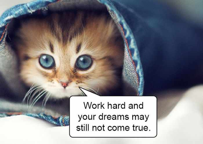 20 Hard Truths From Cats Will Amaze You -11