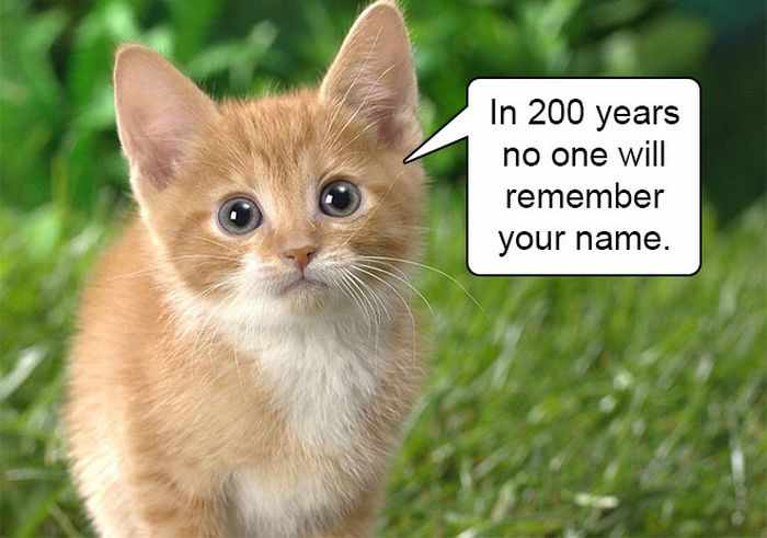 20 Hard Truths From Cats Will Amaze You -12