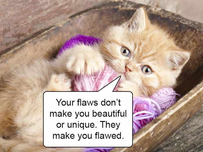20 Hard Truths From Cats Will Amaze You -14