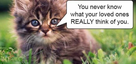 hard-truths-from-cats-16
