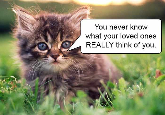 20 Hard Truths From Cats Will Amaze You -16