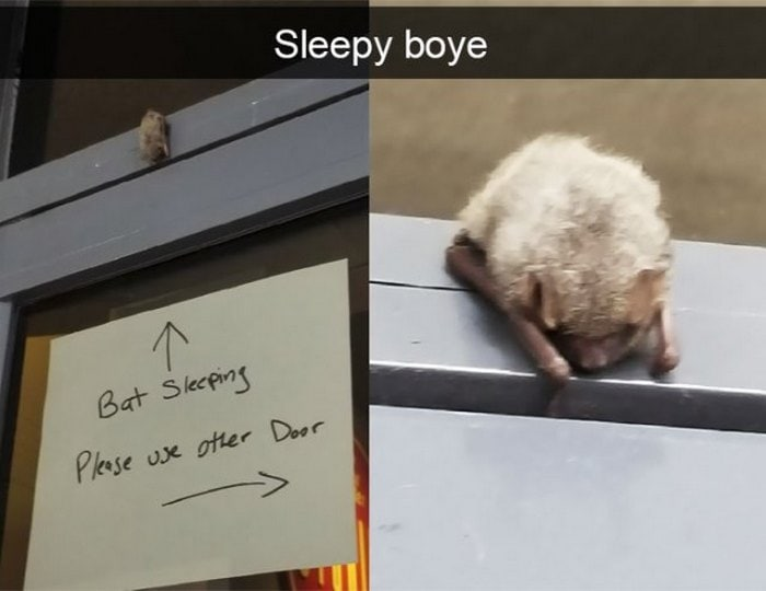36 Hilarious Animal Snapchats Guaranteed To Make You LOL-01