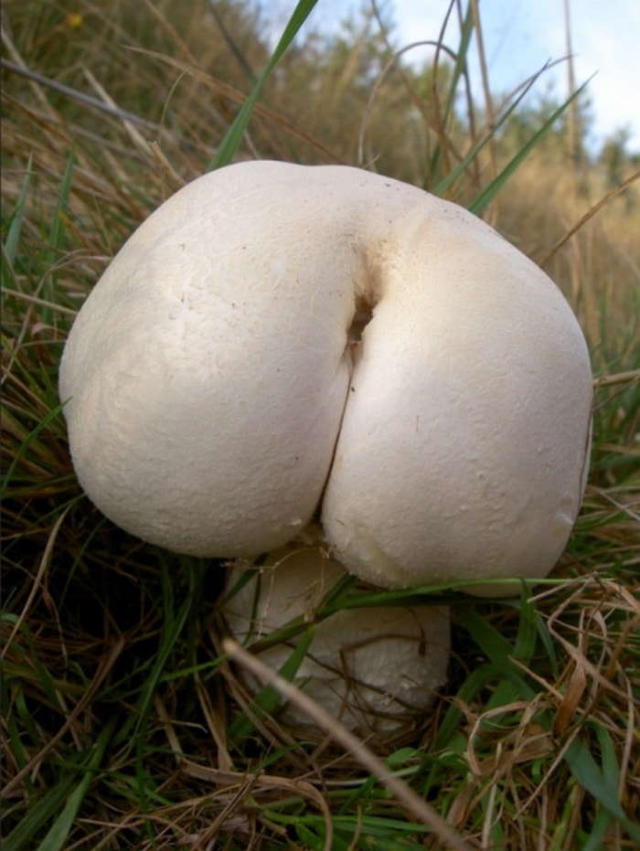 18 Funny Mushroom Photos That Confirm You Have A Dirty Mind-05