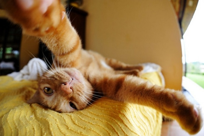 21 Funniest Pics of Cats Taking Selfies That Will Shock You-04
