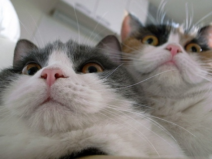 21 Funniest Pics of Cats Taking Selfies That Will Shock You-05