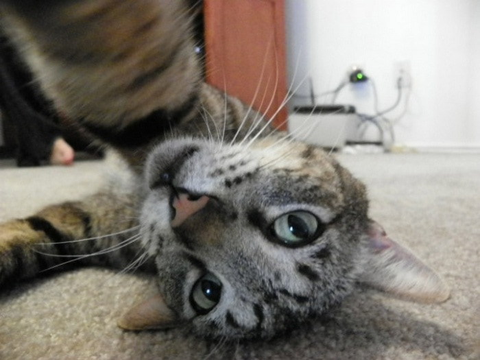 21 Funniest Pics of Cats Taking Selfies That Will Shock You-06
