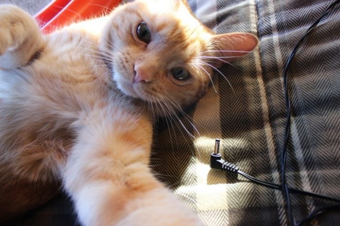 21 Funniest Pics of Cats Taking Selfies That Will Shock You-15