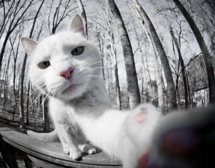 21 Funniest Pics of Cats Taking Selfies That Will Shock You-17