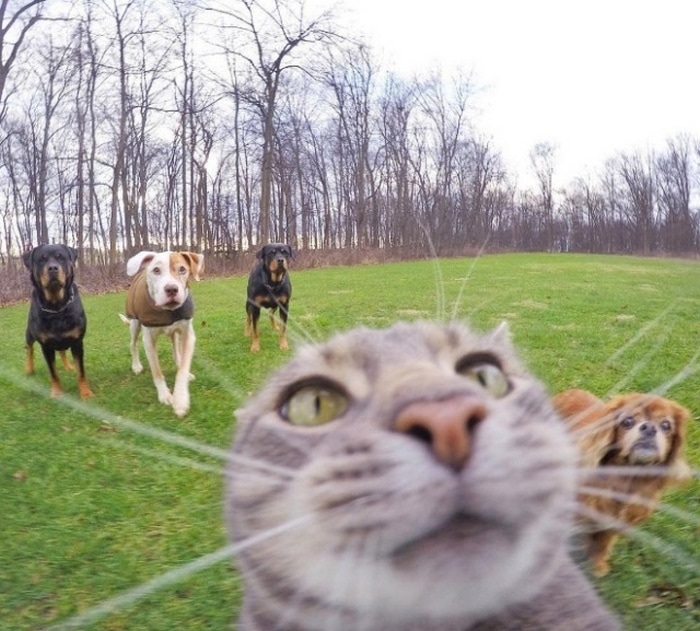 21 Funniest Pics of Cats Taking Selfies That Will Shock You-20