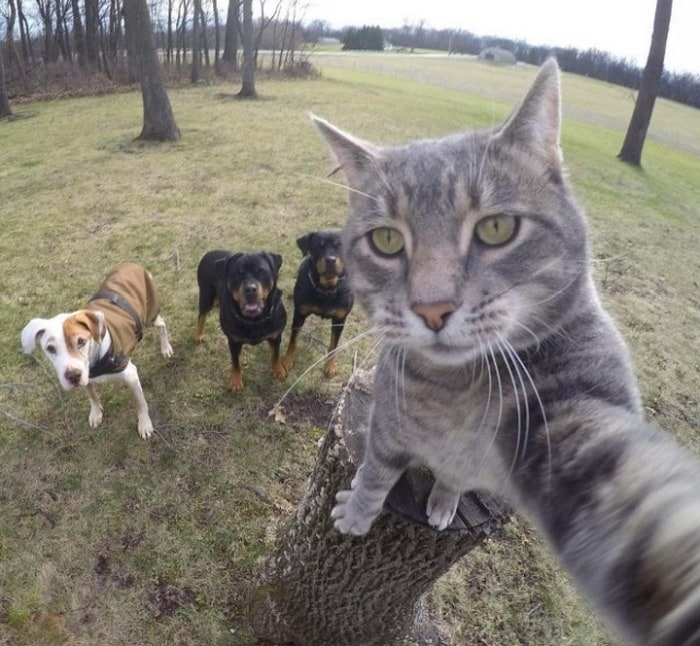21 Funniest Pics of Cats Taking Selfies That Will Shock You-21