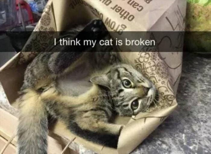 40 Funny Animal Pictures Of The Day Release 1-04