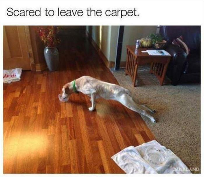 40 Funny Animal Pictures Of The Day Release 1-10