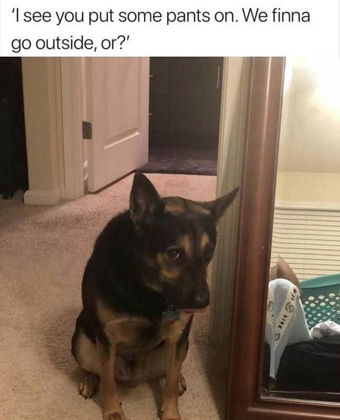40 Funny Animal Pictures Of The Day Release 1-11