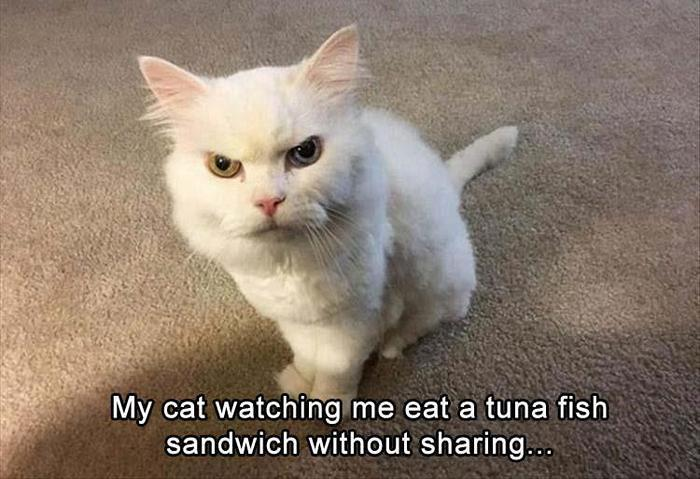 40 Funny Animal Pictures Of The Day Release 1-12