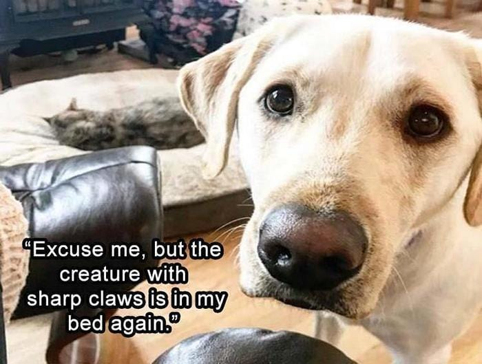 40 Funny Animal Pictures Of The Day Release 1-13