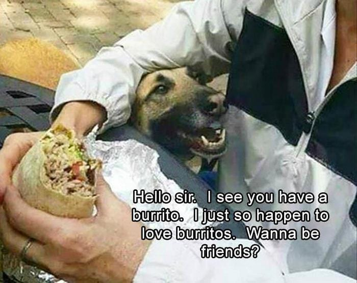 40 Funny Animal Pictures Of The Day Release 1-15