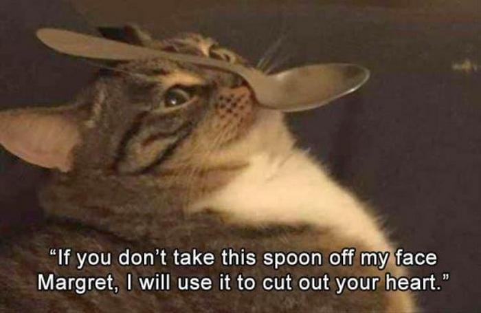 Funny Animal Pictures Of The Day Release 3 (64 Photos)-03