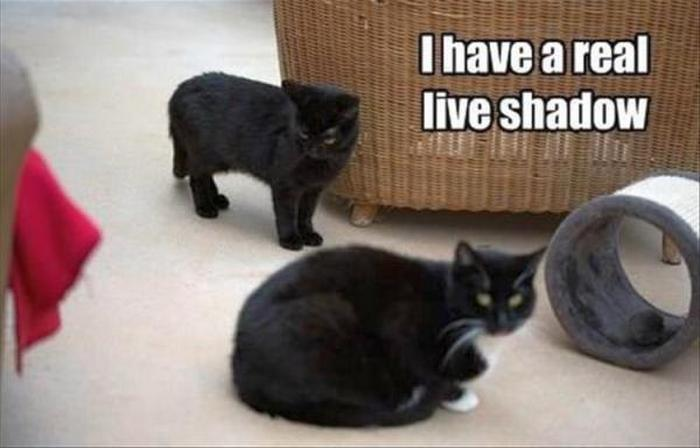 Funny Animal Pictures Of The Day Release 3 (64 Photos)-04