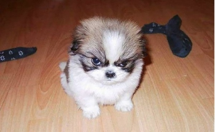 35 Grumpy Animals Who Really Hate You-06