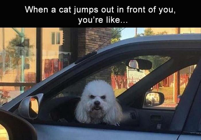 Daily Funny Memes And Pictures Release 4 (63 Pics)-12