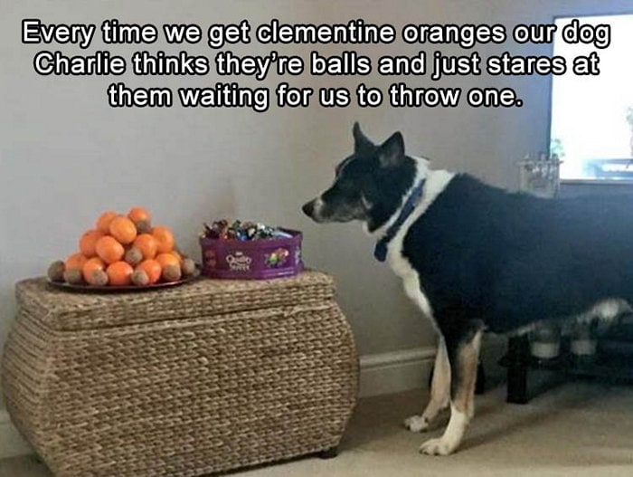 Funny Animal Pictures Of The Day Release 5 (65 Photos)-57