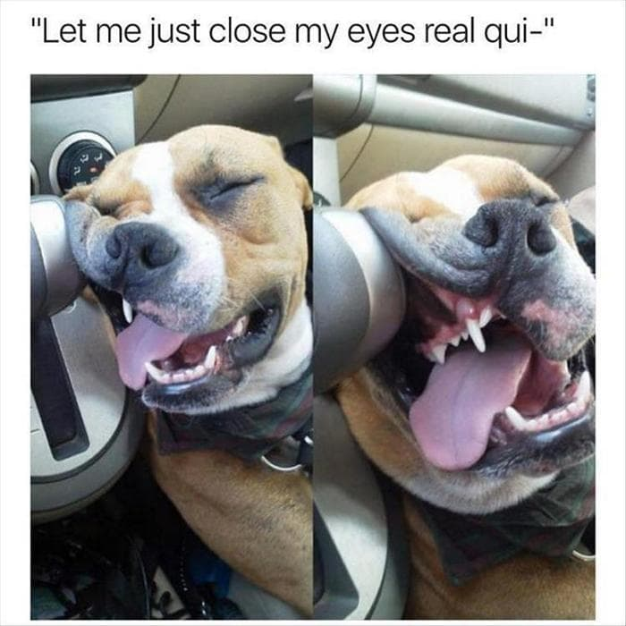 Funny Animal Pictures Of The Day Release 6 (90 Photos)-15
