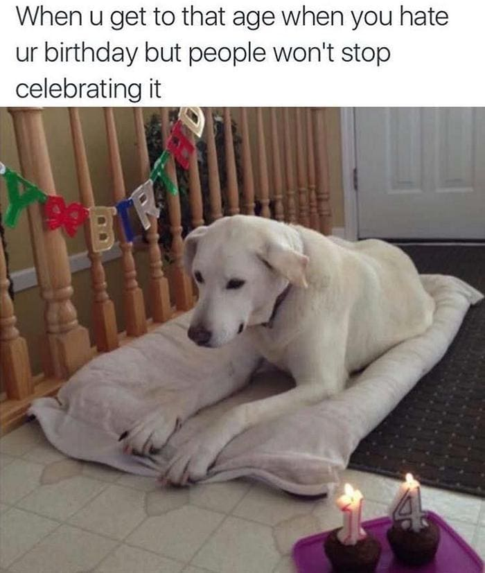 Funny Animal Pictures Of The Day Release 6 (90 Photos)-16