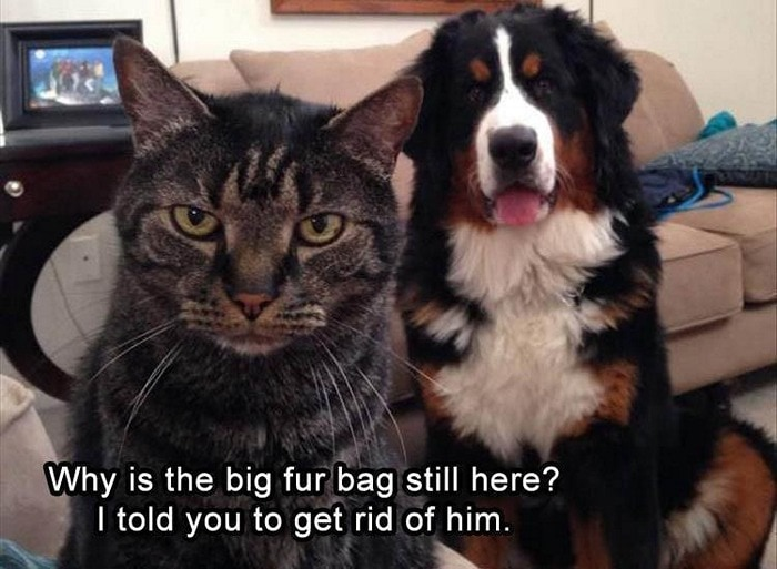 Funny Animal Pictures Of The Day Release 6 (90 Photos)-20