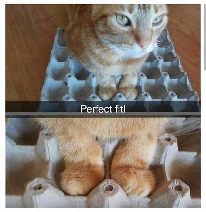 Funny Animal Pictures Of The Day Release 6 (90 Photos)-22
