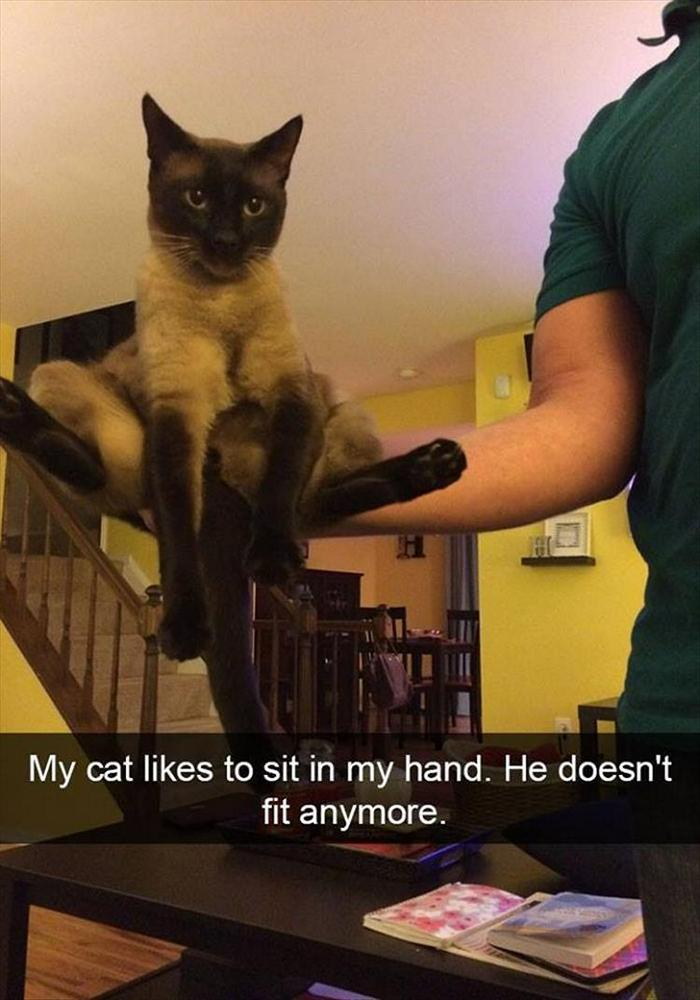 Funny Animal Pictures Of The Day Release 6 (90 Photos)-39