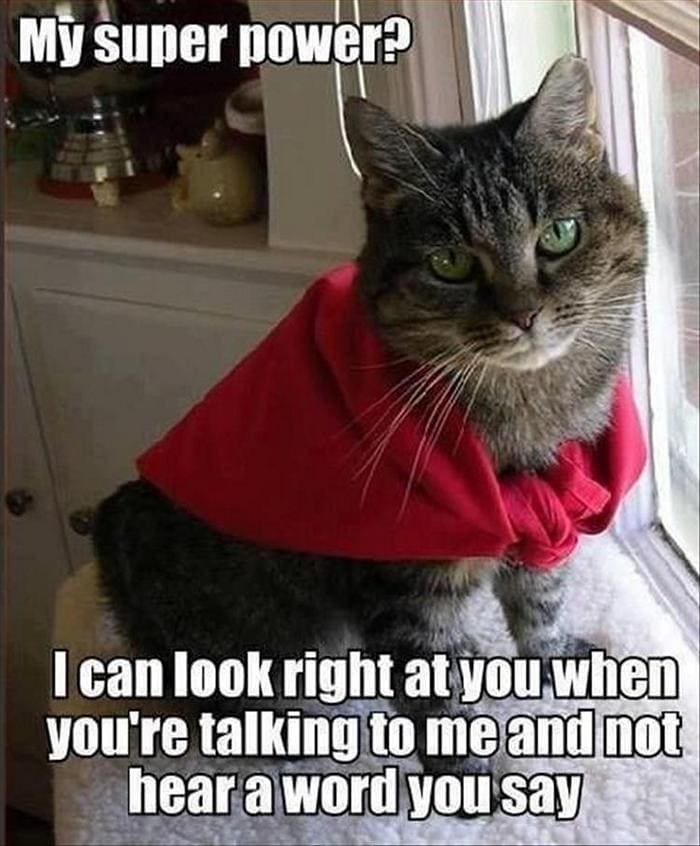 Funny Animal Pictures Of The Day Release 6 (90 Photos)-51