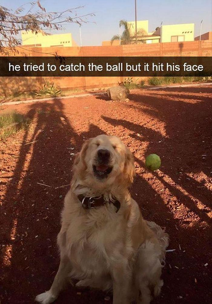 Funny Animal Pictures Of The Day Release 6 (90 Photos)-83