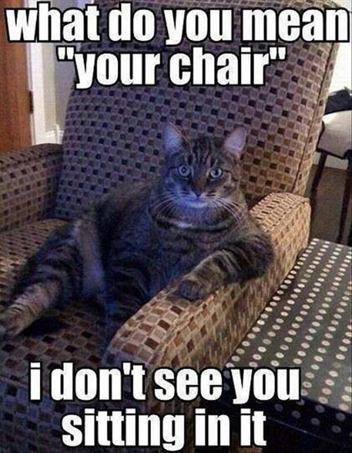 Funny Animal Pictures Of The Day Release 6 (90 Photos)-84