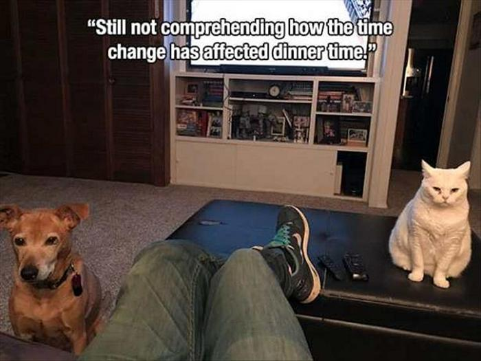 Funny Animal Pictures Of The Day Release 7 (100 Photos)-11