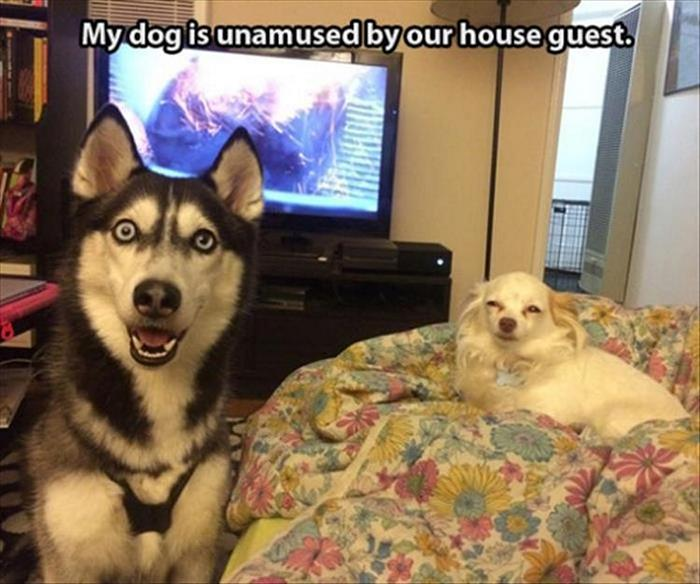 Funny Animal Pictures Of The Day Release 7 (100 Photos)-24