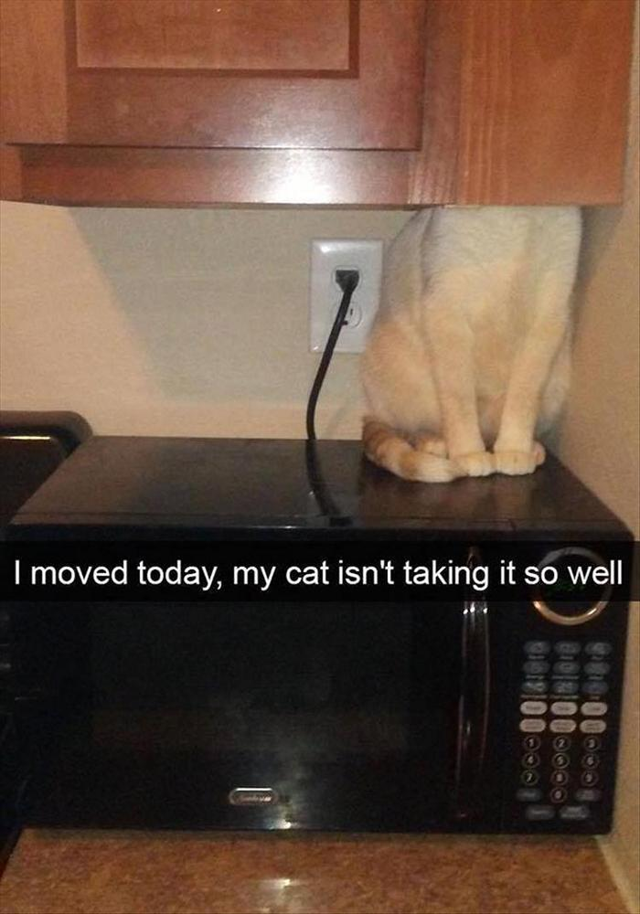 Funny Animal Pictures Of The Day Release 7 (100 Photos)-38