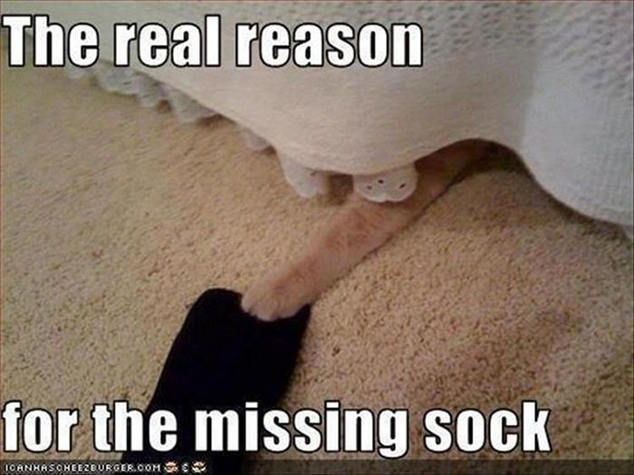 Funny Animal Pictures Of The Day Release 7 (100 Photos)-40