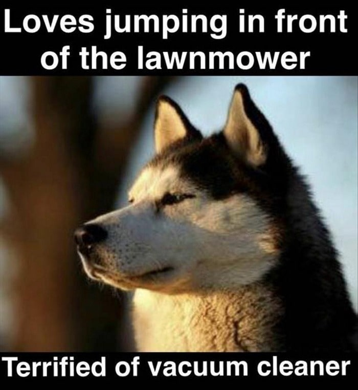 Funny Animal Pictures Of The Day Release 7 (100 Photos)-41
