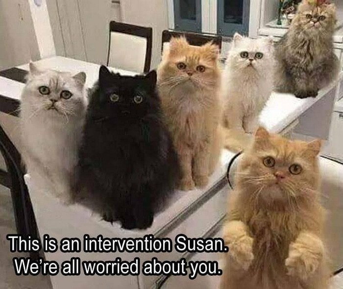 Funny Animal Pictures Of The Day Release 7 (100 Photos)-42
