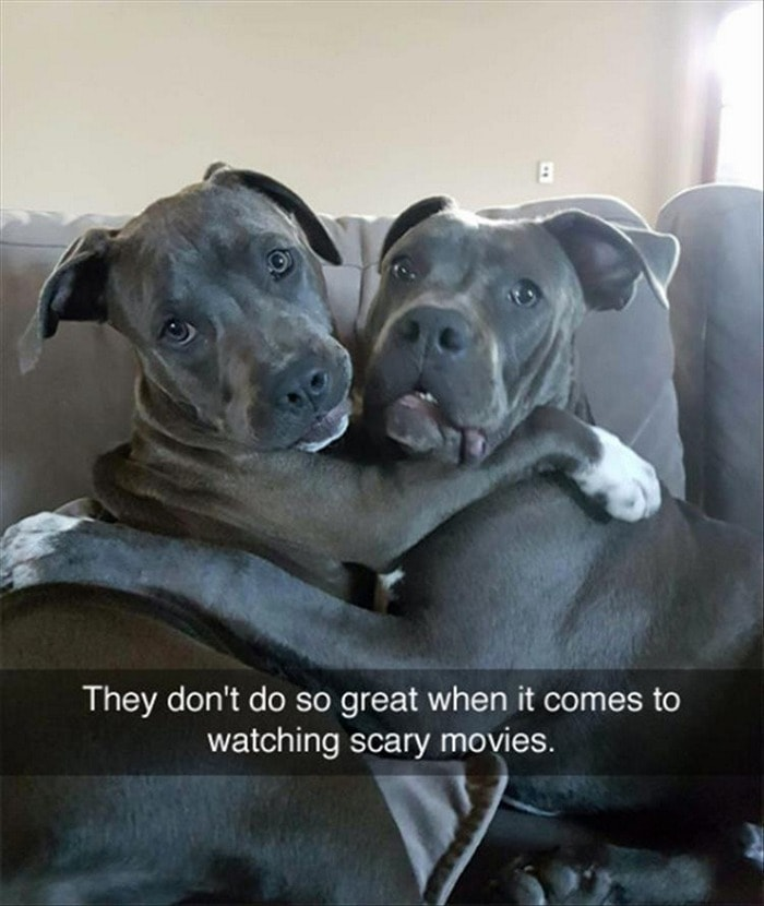 Funny Animal Pictures Of The Day Release 7 (100 Photos)-43