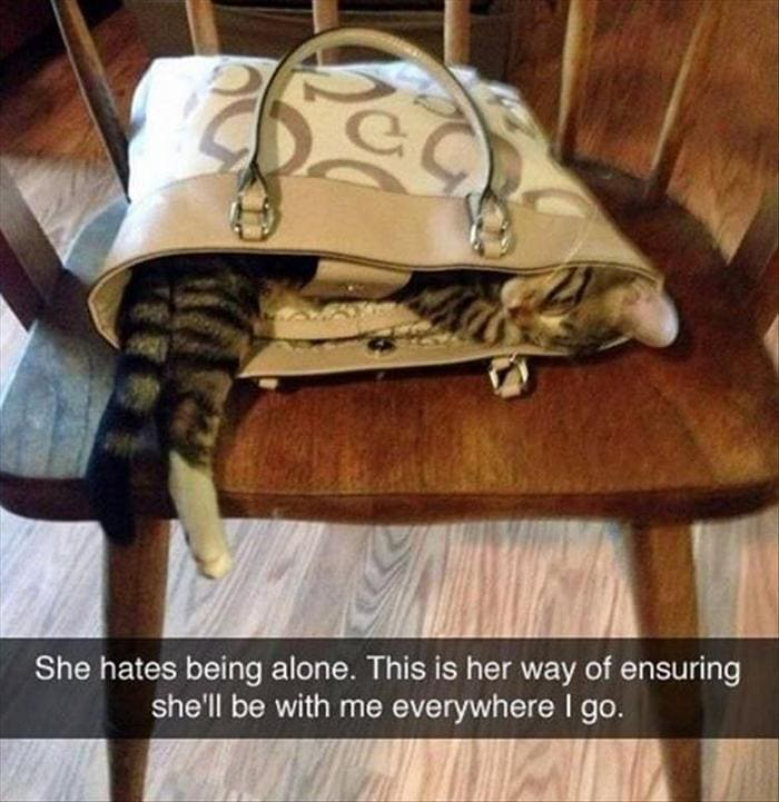 Funny Animal Pictures Of The Day Release 7 (100 Photos)-44