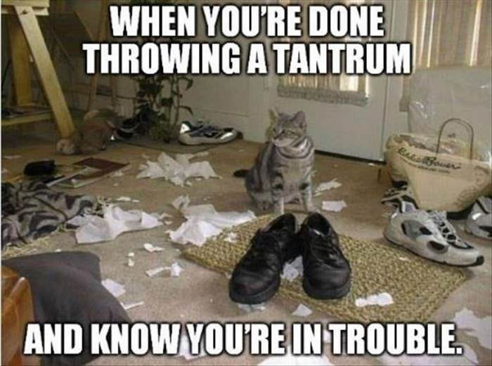 Funny Animal Pictures Of The Day Release 7 (100 Photos)-47