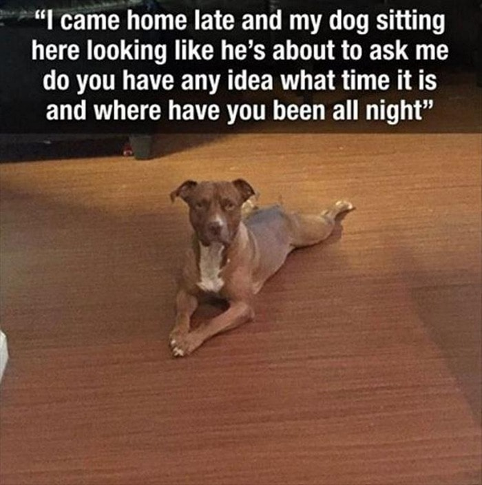 Funny Animal Pictures Of The Day Release 7 (100 Photos)-49