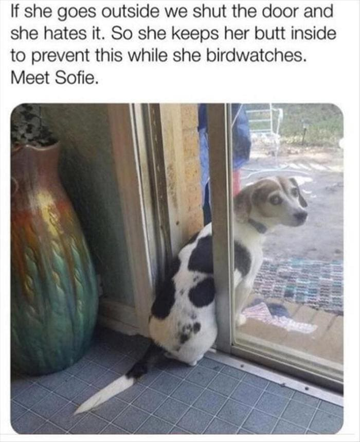 Funny Animal Pictures Of The Day Release 7 (100 Photos)-50